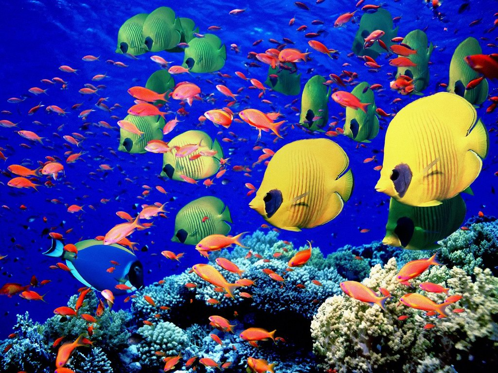 saltwater tropical fish wallpapaer - Live tropical fish