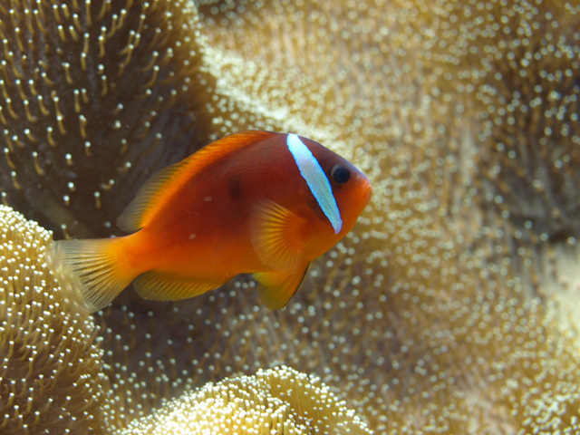 Beautiful fish in the world live tropical fish for Live tropical fish