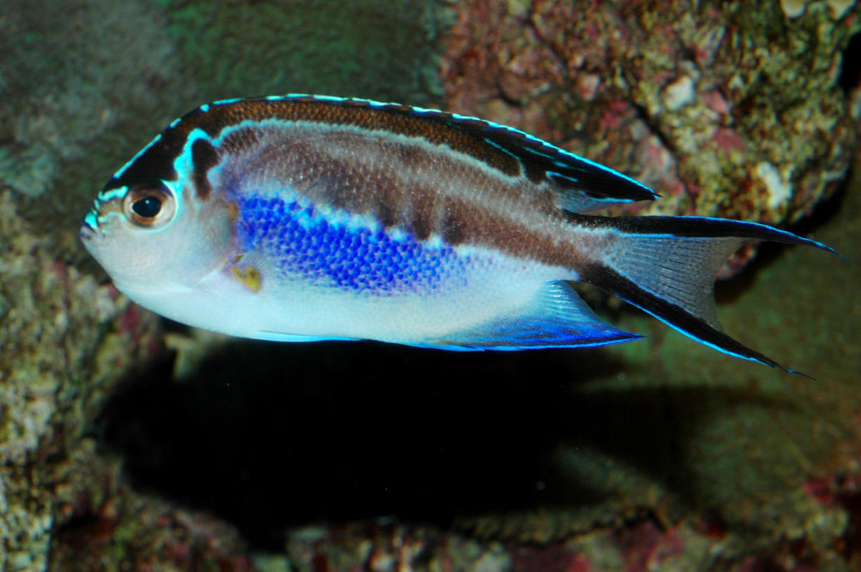 Cool saltwater fish for Cool freshwater fish