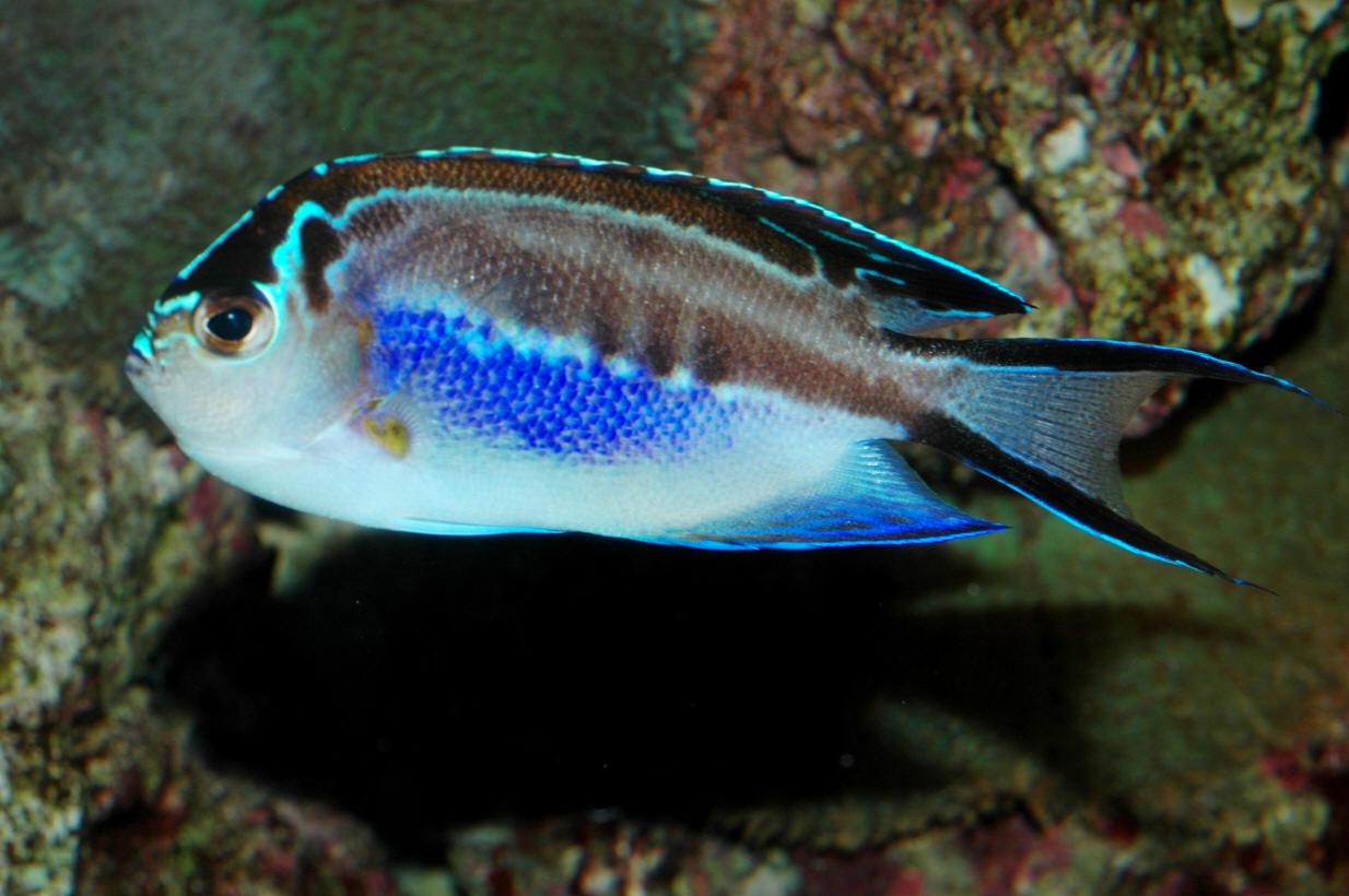 Cool salt water aquarium fish picture live tropical fish for Cool pet fish