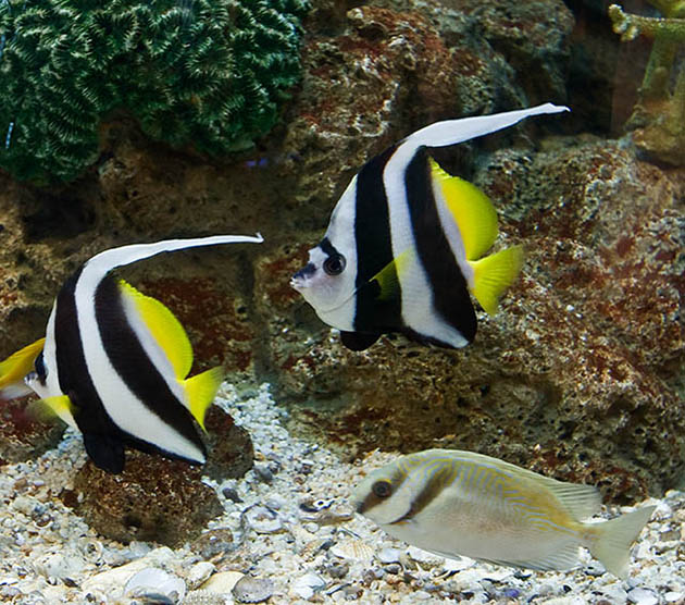 Cool salt water aquarium fish picture live tropical fish for Cool fresh water fish