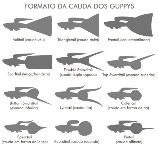 caudas-guppys-cursos-cpt