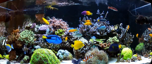 Installing a Saltwater Aquarium