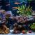 Installing a Saltwater Aquarium2