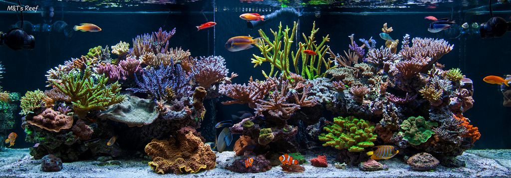 Installing a saltwater aquarium live tropical fish for Marine fish tanks