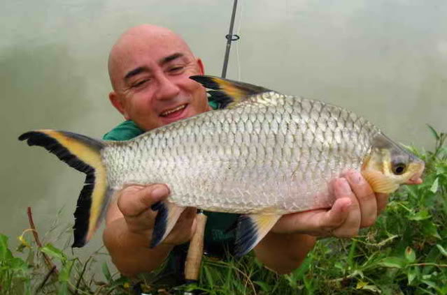 Royal Canin Sterilised 414p as well Super Red Asian Arowana furthermore T1022 Poisson Roseau also Chicken furthermore How To Identify Male And Female. on oscar food fish