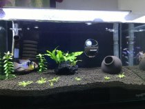 Aquarium Plants For newbies