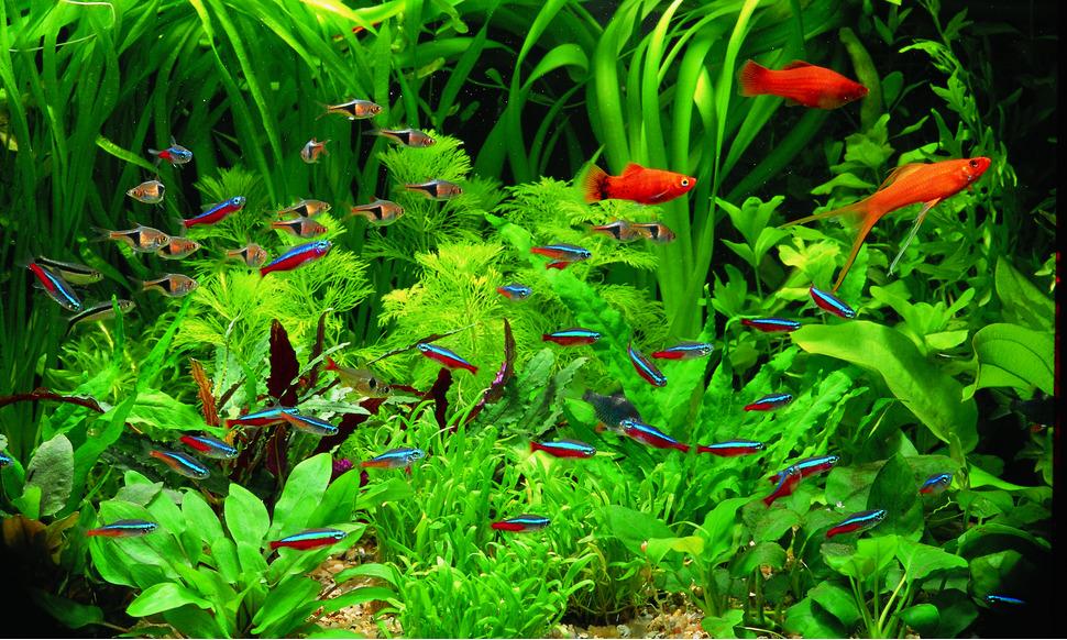 Aquarium Plants For Newbies Live Tropical Fish Live